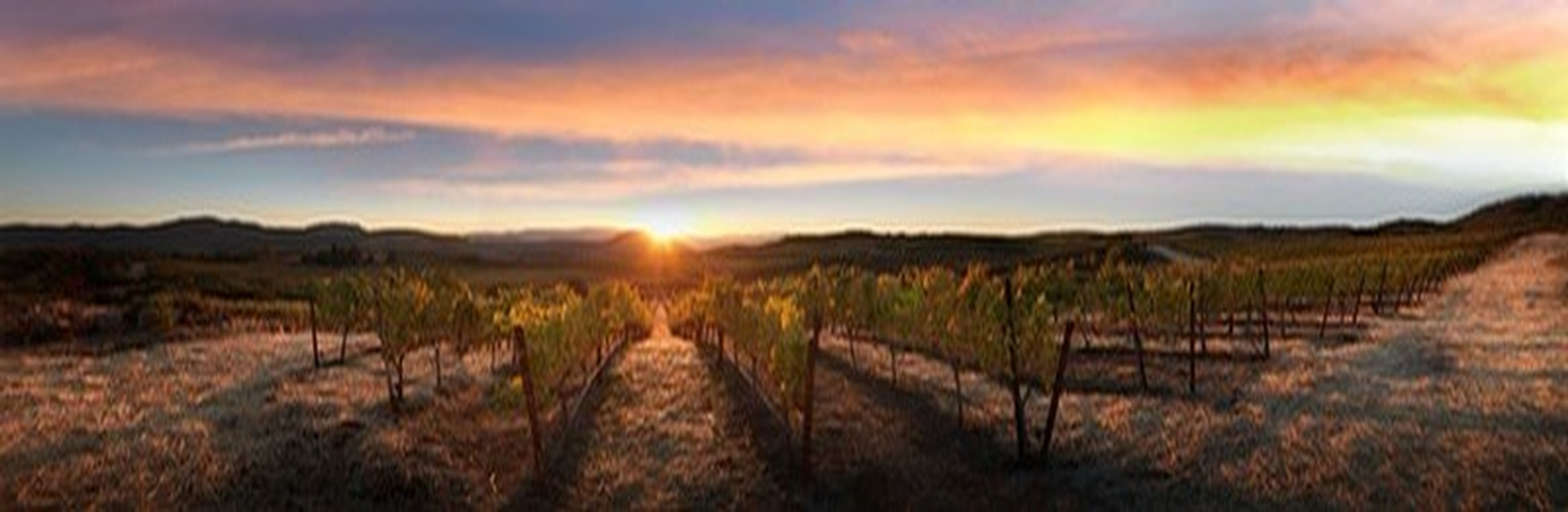 A fantastic panoramic view at sunset of the property and vines.